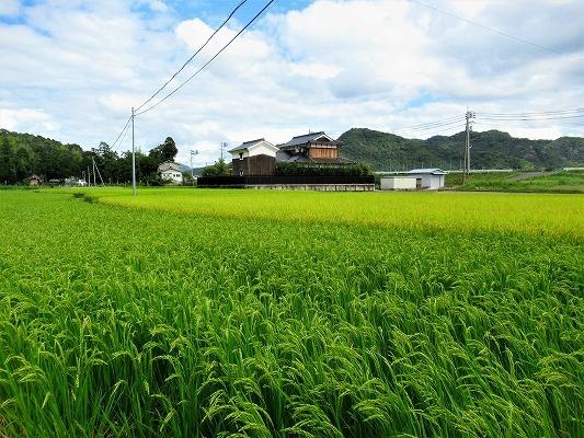 和気町大田原の農地
